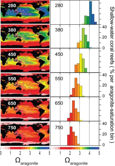 Effects of warming on coral reefs