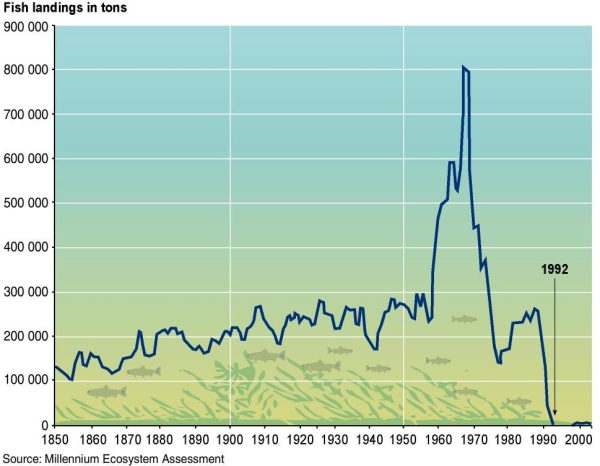 Atlantic_northern_cod_stocks