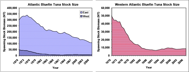 Atlantic_bluefin_stock_sizes