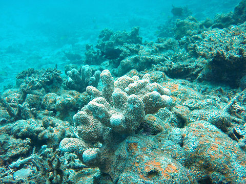 Coral_reefs_japan_threatened