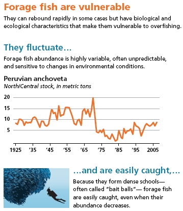 Forage_fish_vulnerable