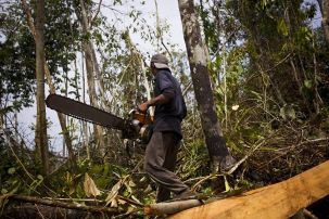 Deforestation_indonesia