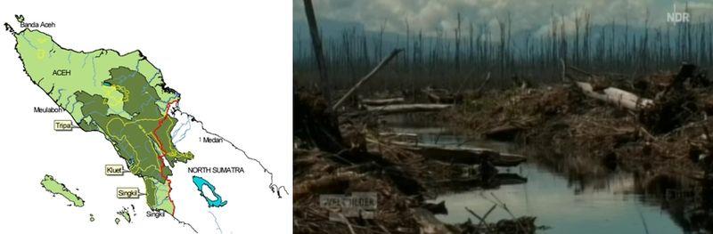 Tripa_swamp_forest