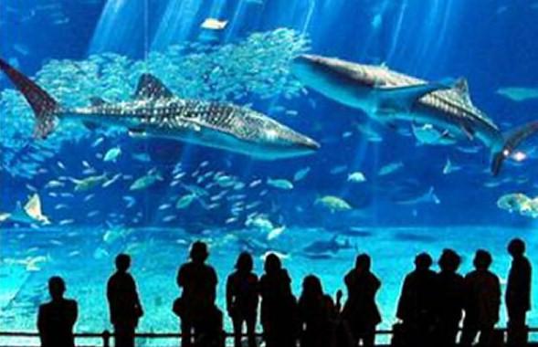 Sharks_aquarium