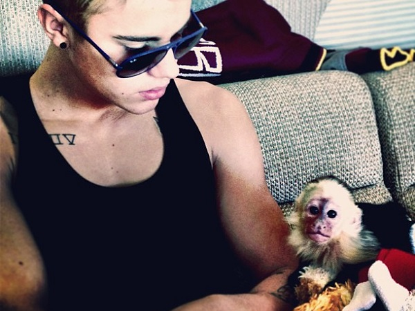 Bieber_monkey