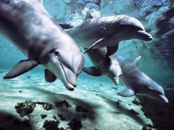 Dolphins_tanzania