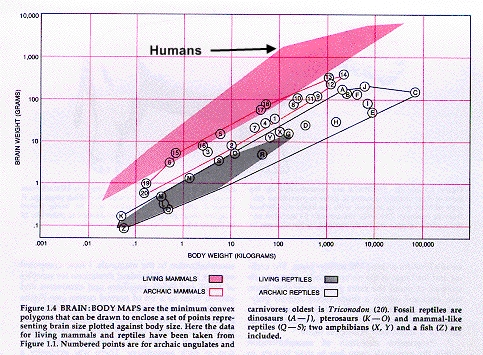 Encephalization_mammals_jerison_1976_edit