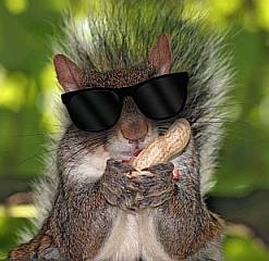 Blind-Squirrel-Finds-a-Nut-small