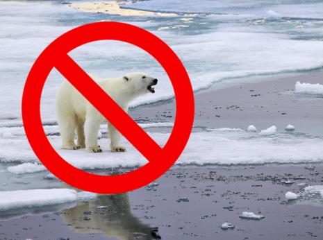 No_polar bears