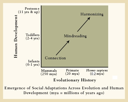 Lieberman_social_adaptations_evolution