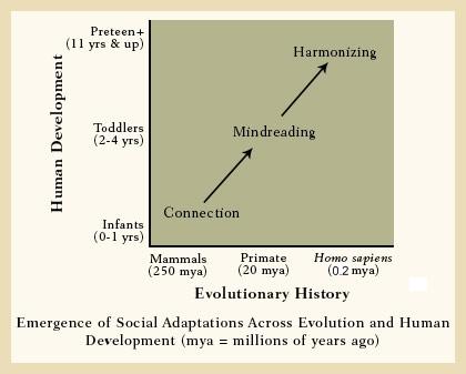 Lieberman_social_adaptations_evolution