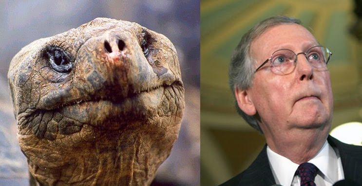 Mitch_mcconnell_reptile